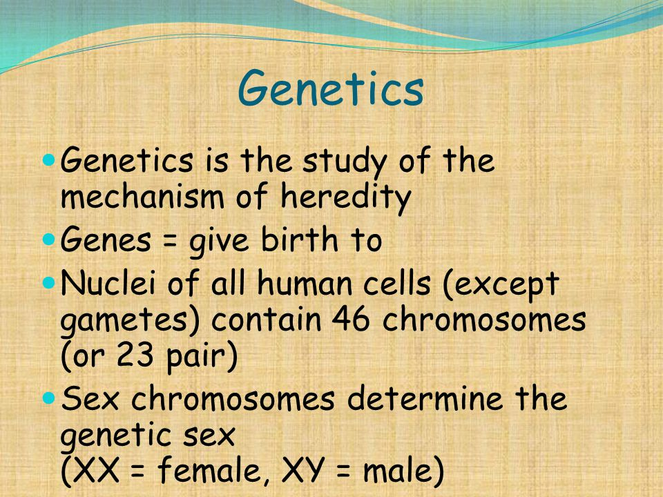 Genetics Genetics is the study of the mechanism of heredity Genes = give birth to Nuclei of all human cells (except gametes) contain 46 chromosomes (o