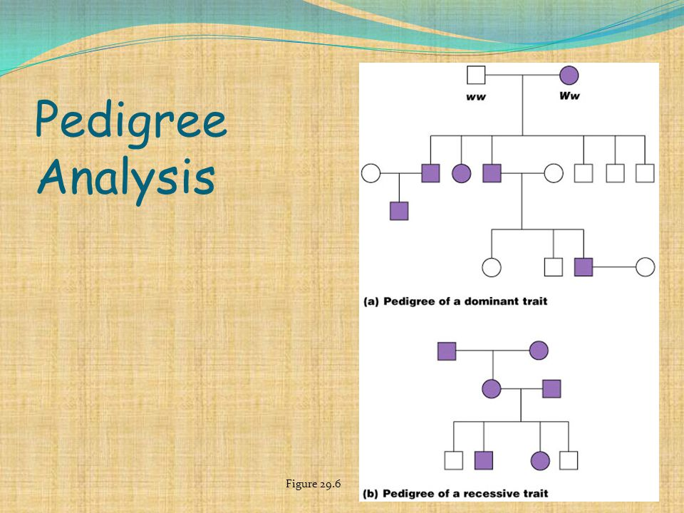 Pedigree Analysis Figure 29.6