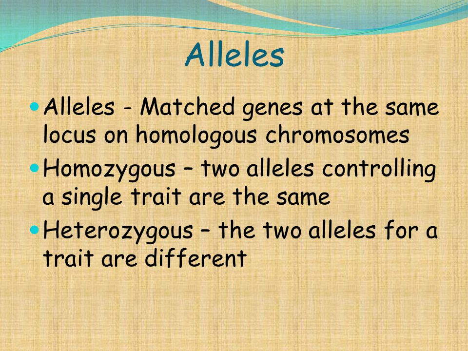 Alleles Alleles - Matched genes at the same locus on homologous chromosomes Homozygous – two alleles controlling a single trait are the same Heterozyg