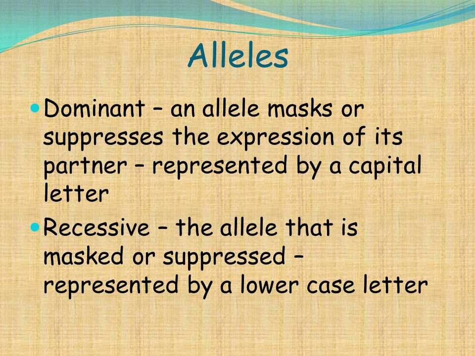 Alleles Dominant – an allele masks or suppresses the expression of its partner – represented by a capital letter Recessive – the allele that is masked