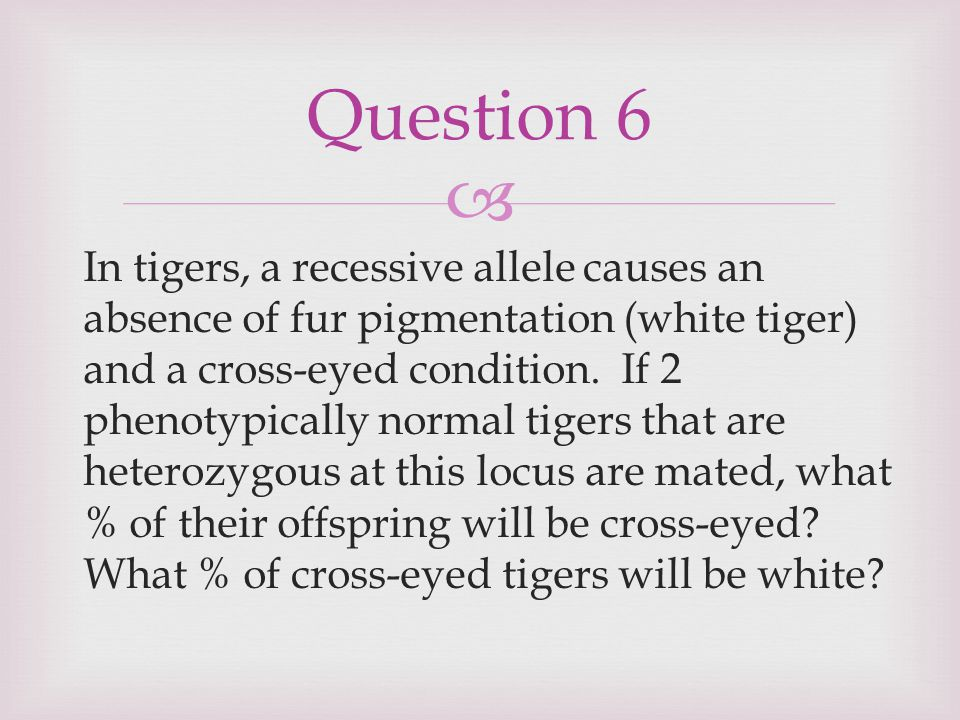  In tigers, a recessive allele causes an absence of fur pigmentation (white tiger) and a cross-eyed condition. If 2 phenotypically normal tigers that