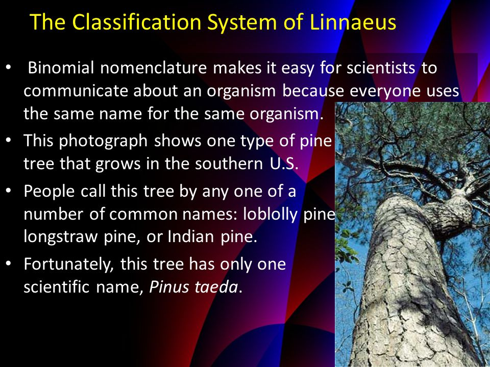 The Classification System of Linnaeus Binomial nomenclature makes it easy for scientists to communicate about an organism because everyone uses the sa
