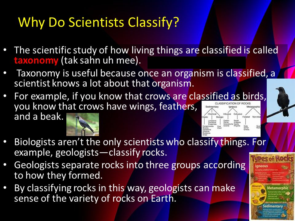 Why Do Scientists Classify? The scientific study of how living things are classified is called taxonomy (tak sahn uh mee). Taxonomy is useful because