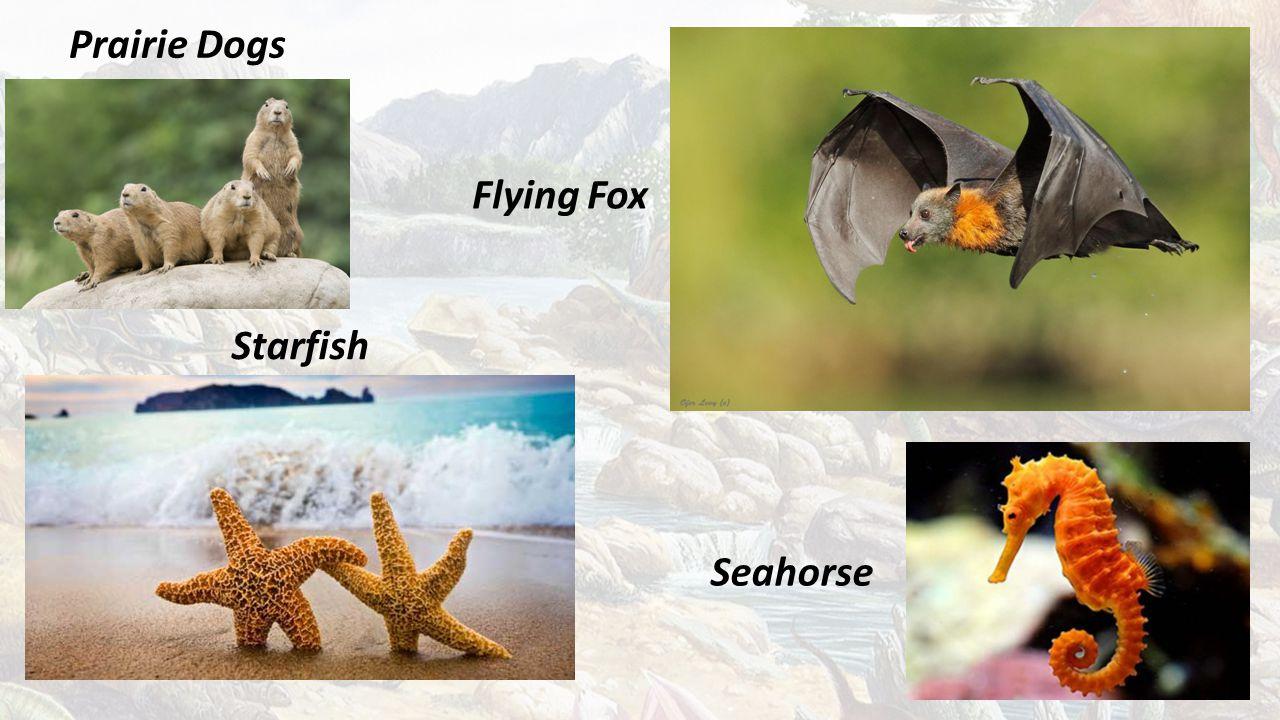 Prairie Dogs Starfish Seahorse Flying Fox