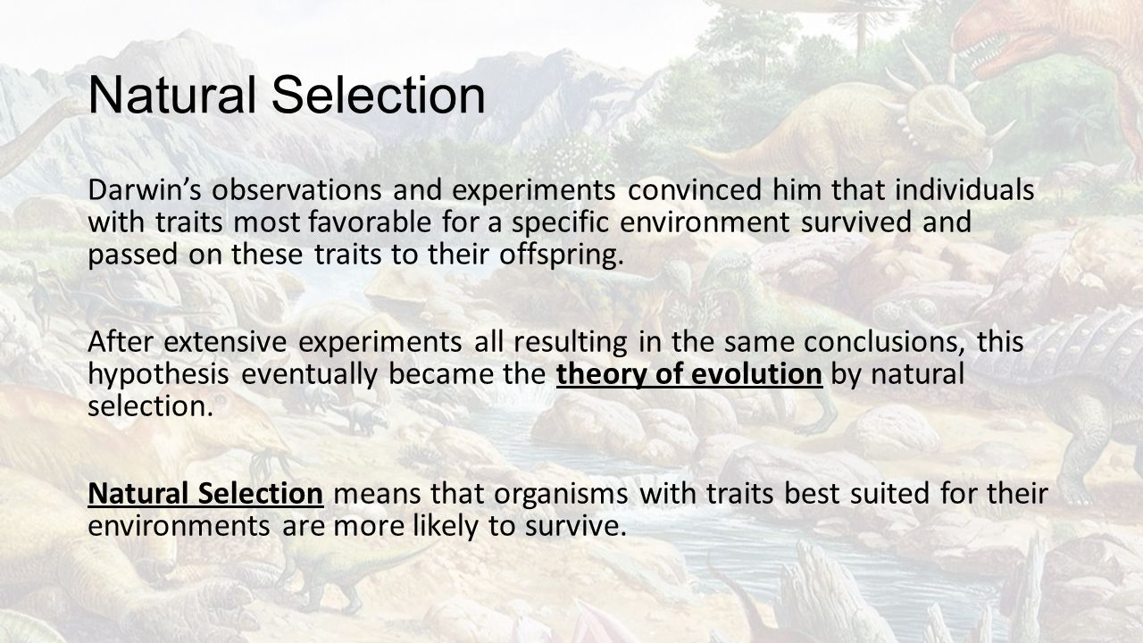 Natural Selection Darwin's observations and experiments convinced him that individuals with traits most favorable for a specific environment survived