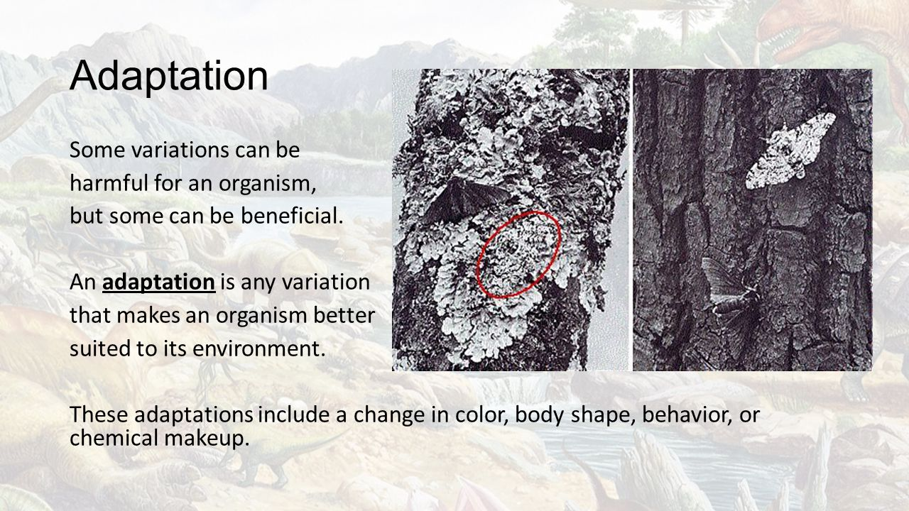 Adaptation Some variations can be harmful for an organism, but some can be beneficial. An adaptation is any variation that makes an organism better su