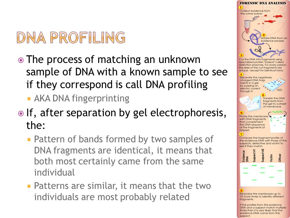  The process of matching an unknown sample of DNA with a known sample to see if they correspond is call DNA profiling  AKA DNA fingerprinting  If, after separation by gel electrophoresis, the:  Pattern of bands formed by two samples of DNA fragments are identical, it means that both most certainly came from the same individual  Patterns are similar, it means that the two individuals are most probably related