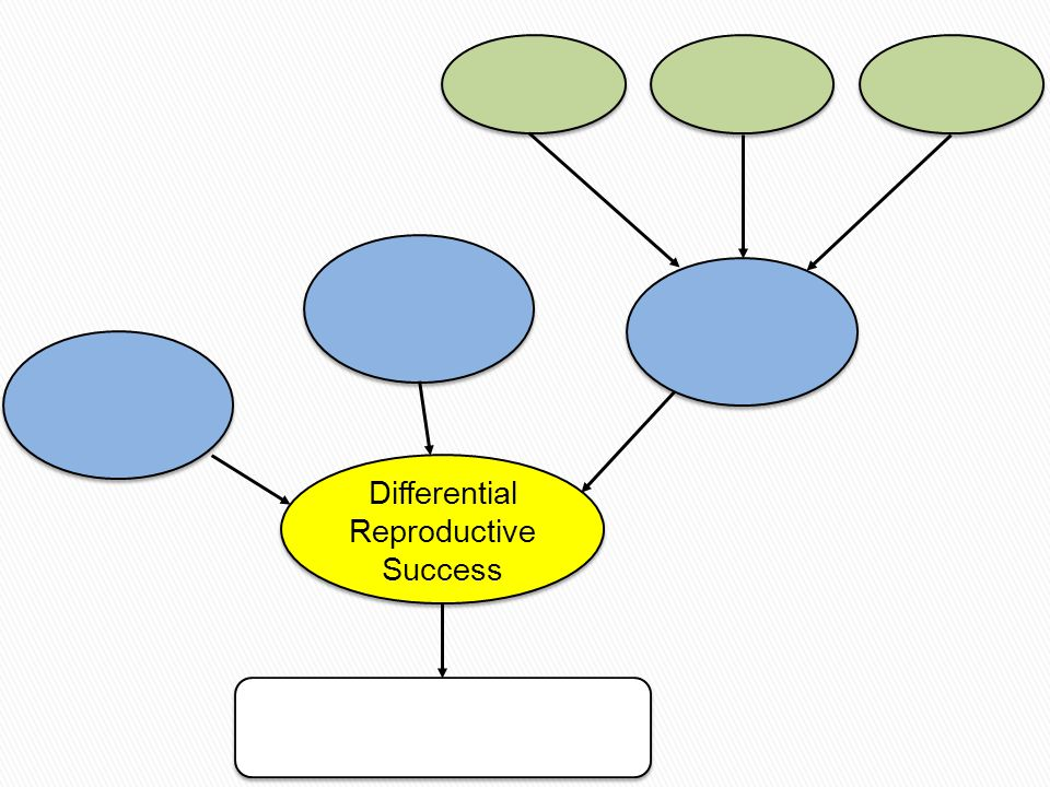 Differential Reproductive Success Differential Reproductive Success