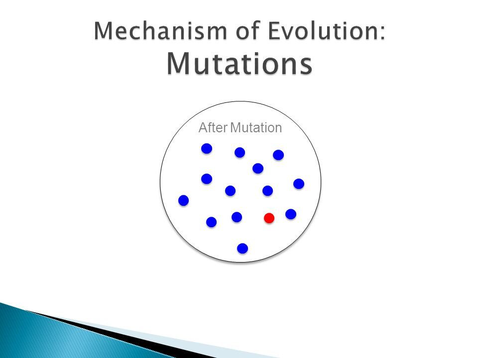 After Mutation