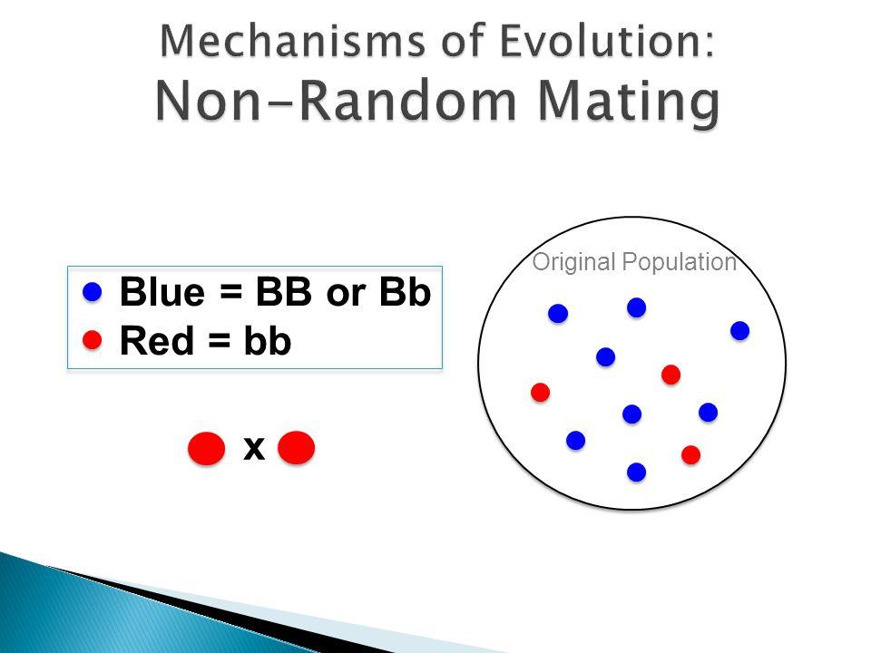 Original Population Blue = BB or Bb Red = bb x