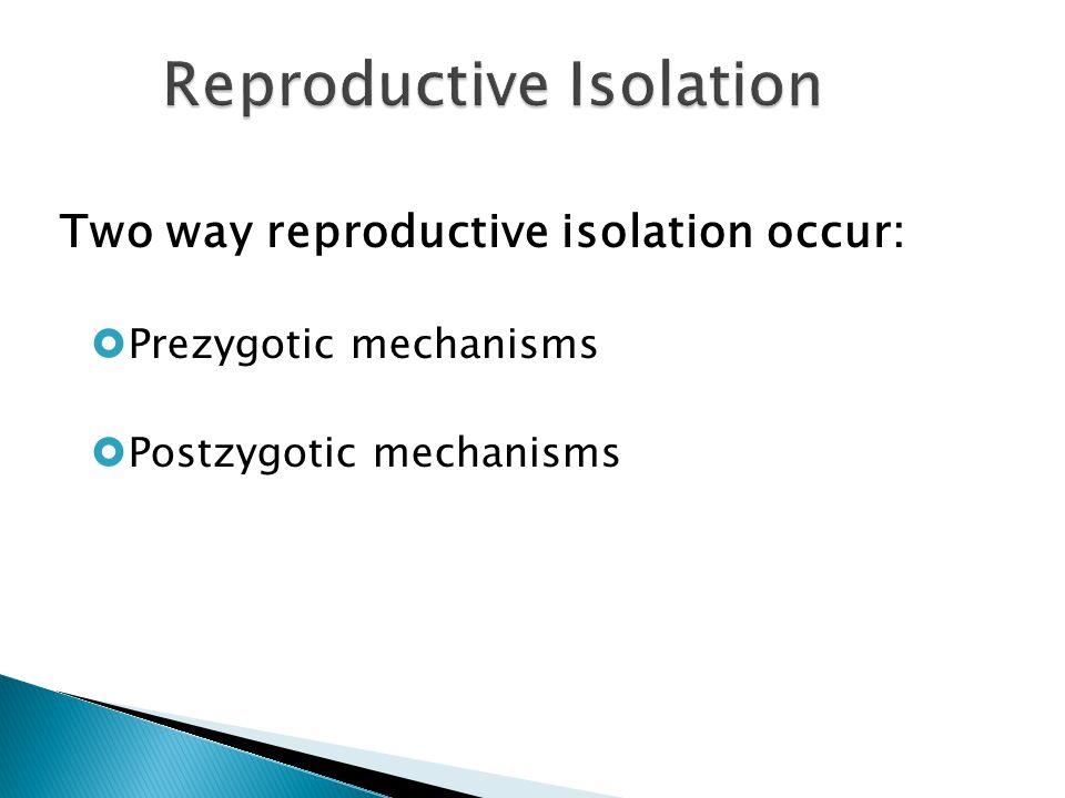 Two way reproductive isolation occur:  Prezygotic mechanisms  Postzygotic mechanisms