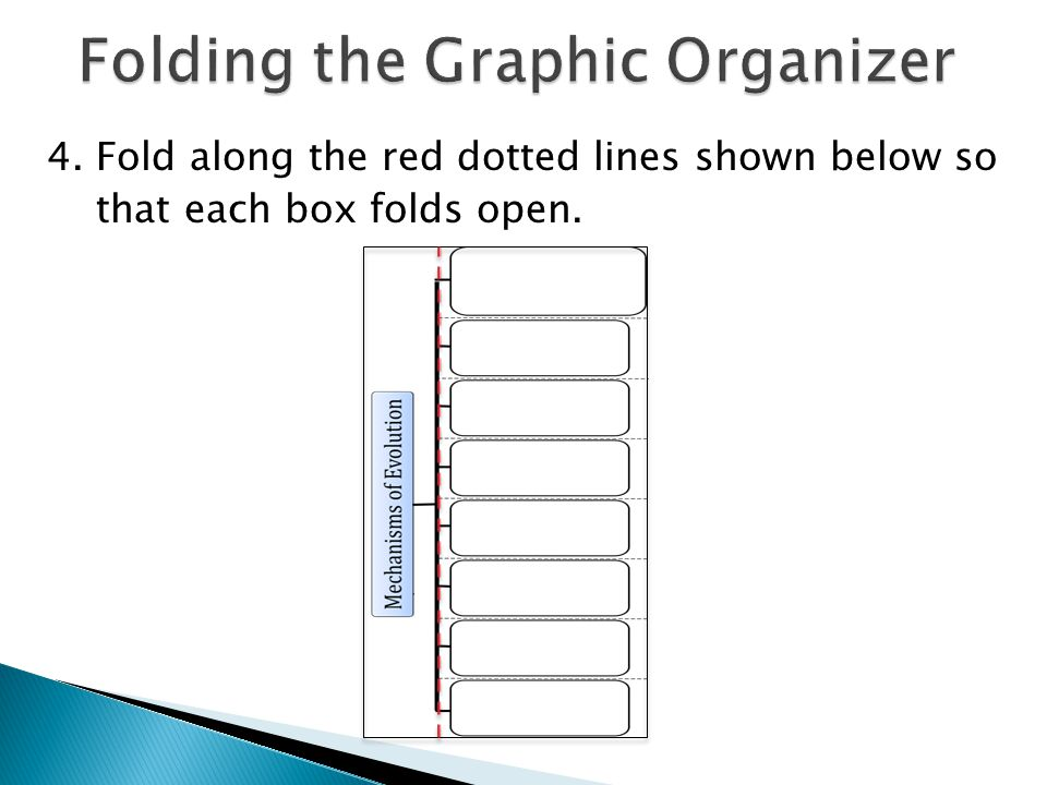 4. Fold along the red dotted lines shown below so that each box folds open.