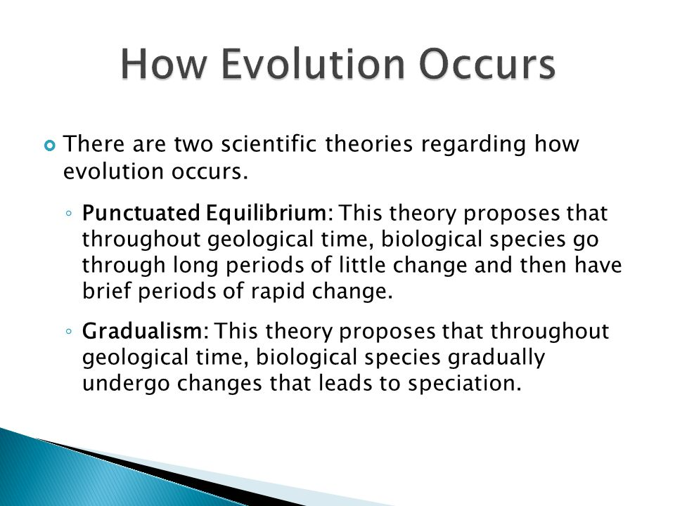  There are two scientific theories regarding how evolution occurs. ◦ Punctuated Equilibrium: This theory proposes that throughout geological time, bi