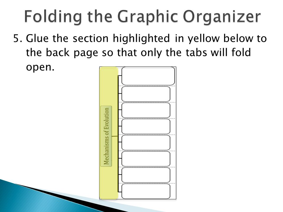  Look back at your graphic organizer.