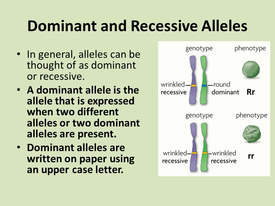 Dominant and Recessive Alleles In general, alleles can be thought of as dominant or recessive. A dominant allele is the allele that is expressed when