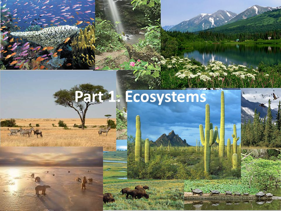 1 st Basic Ecosystem Condition Latitude High Latitude Biomes Temperate Biomes Tropical Biomes High Latitude Biomes Temperate Biomes