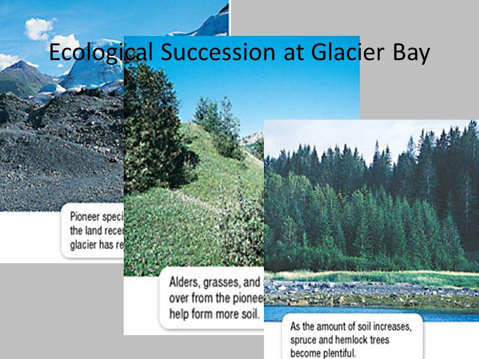 Ecological Succession at Glacier Bay