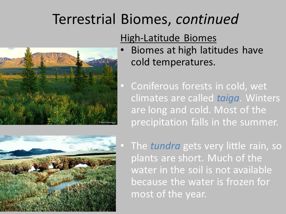Terrestrial Biomes, continued High-Latitude Biomes Biomes at high latitudes have cold temperatures. Coniferous forests in cold, wet climates are calle