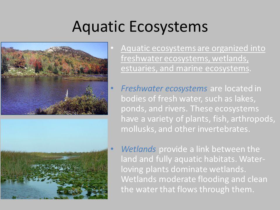 Aquatic Ecosystems Aquatic ecosystems are organized into freshwater ecosystems, wetlands, estuaries, and marine ecosystems. Freshwater ecosystems are