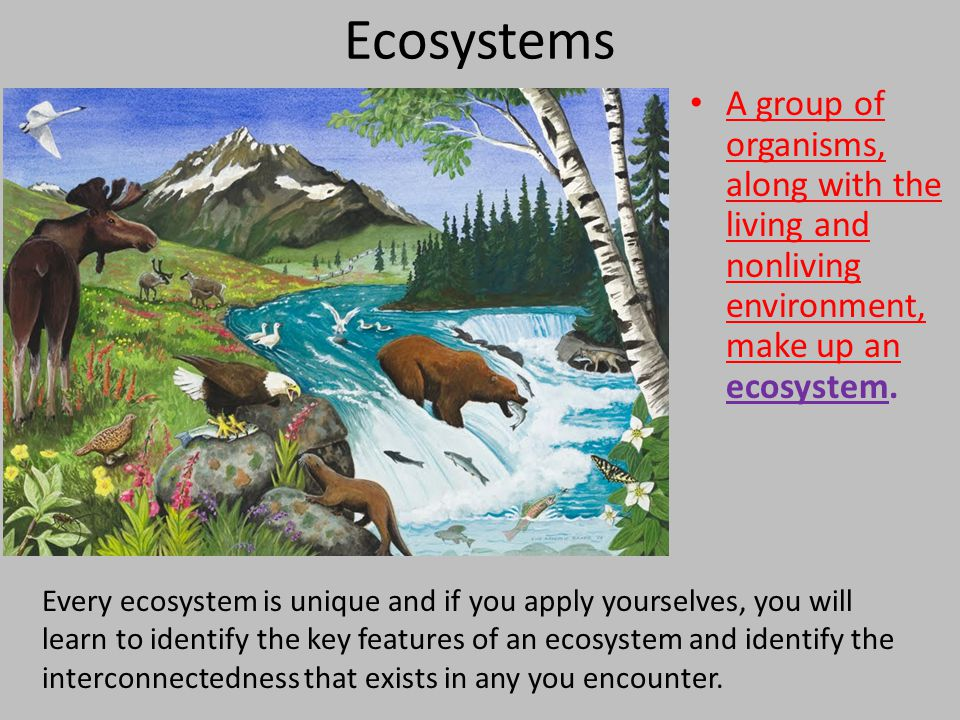 A group of organisms, along with the living and nonliving environment, make up an ecosystem. Every ecosystem is unique and if you apply yourselves, yo