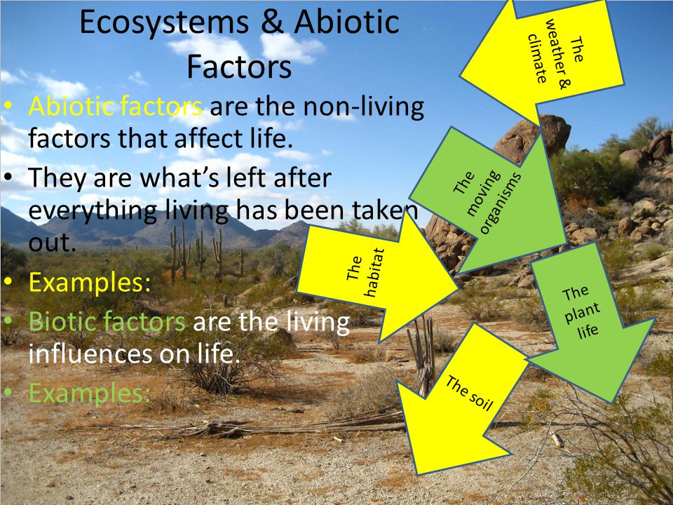 Ecosystems & Abiotic Factors Abiotic factors are the non-living factors that affect life. They are what's left after everything living has been taken