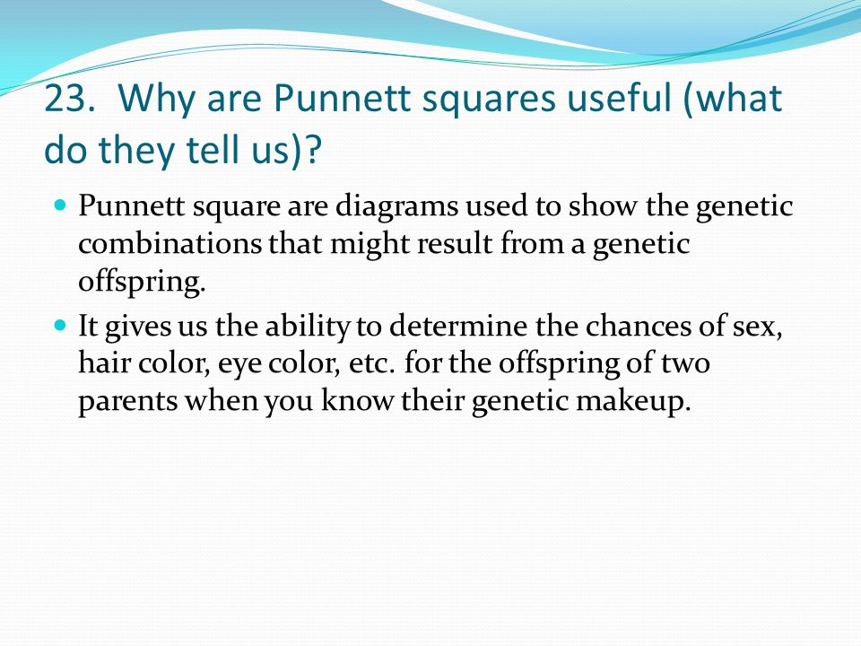 23. Why are Punnett squares useful (what do they tell us)? Punnett square are diagrams used to show the genetic combinations that might result from a