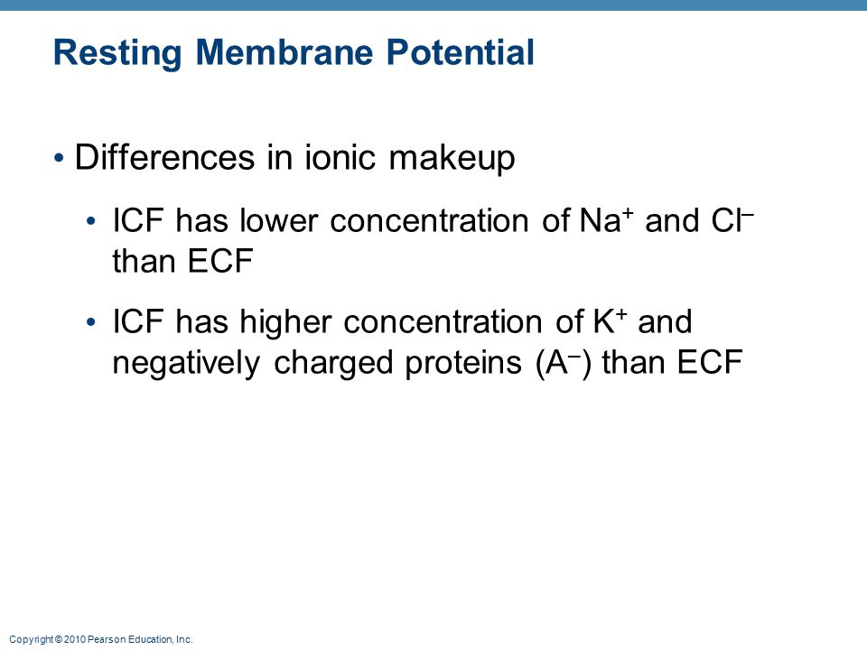 Copyright © 2010 Pearson Education, Inc. Resting Membrane Potential Differences in ionic makeup ICF has lower concentration of Na + and Cl – than ECF