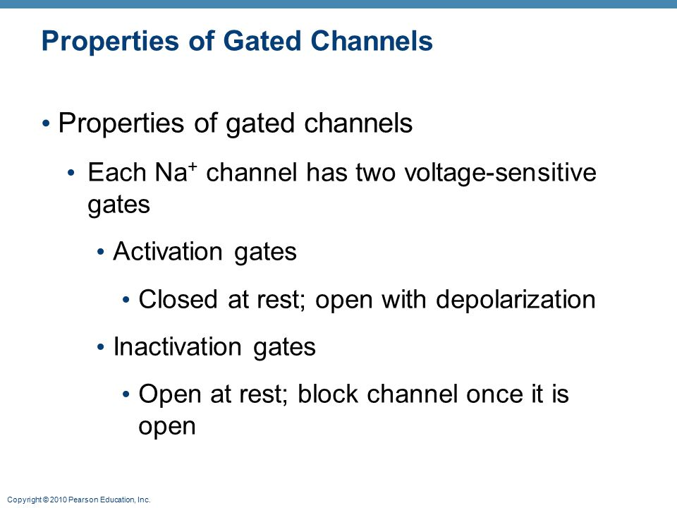 Copyright © 2010 Pearson Education, Inc. Properties of Gated Channels Properties of gated channels Each Na + channel has two voltage-sensitive gates A