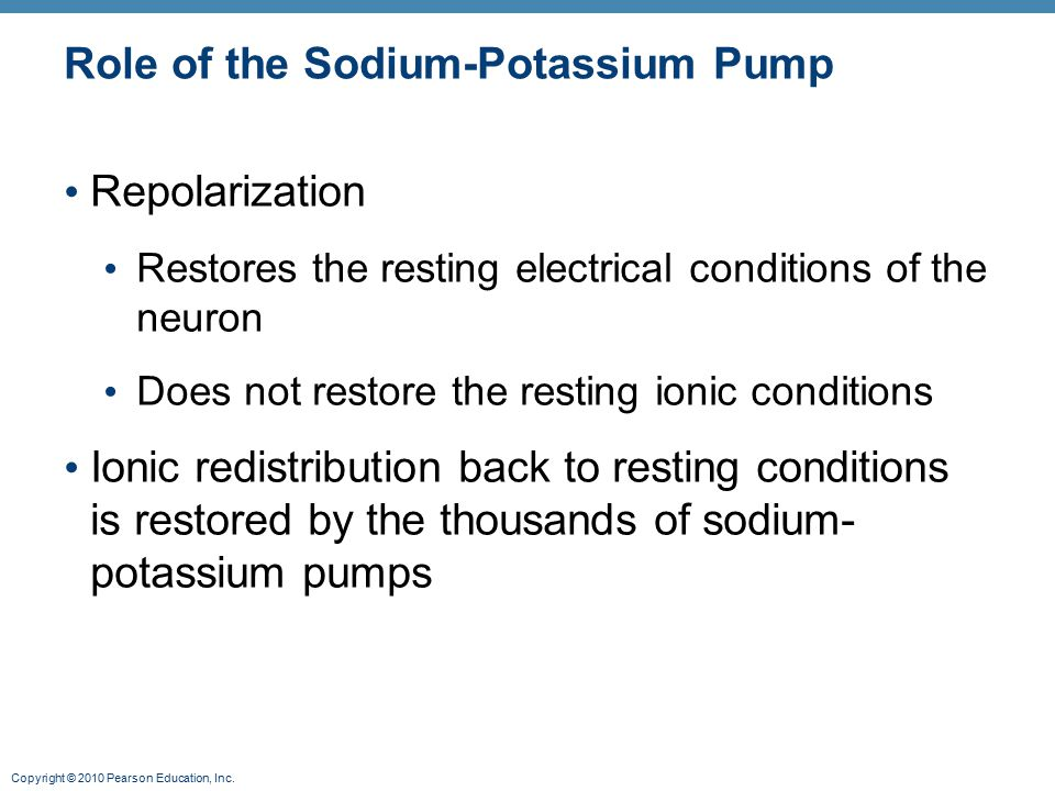Copyright © 2010 Pearson Education, Inc. Role of the Sodium-Potassium Pump Repolarization Restores the resting electrical conditions of the neuron Doe