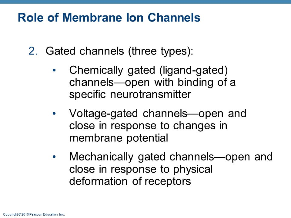 Copyright © 2010 Pearson Education, Inc. Role of Membrane Ion Channels 2.Gated channels (three types): Chemically gated (ligand-gated) channels—open w