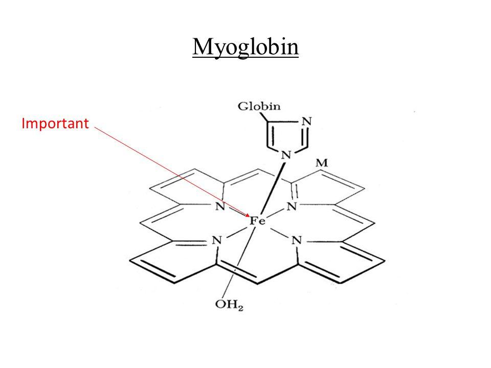 Myoglobin Important