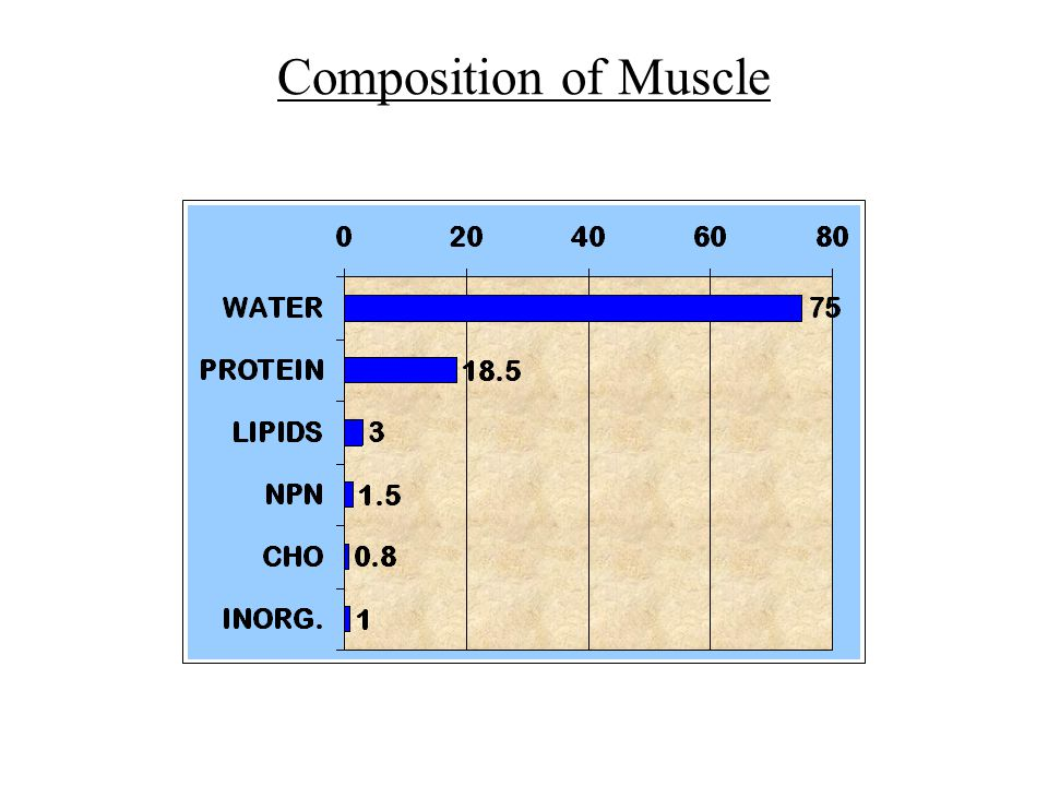 Composition of Muscle