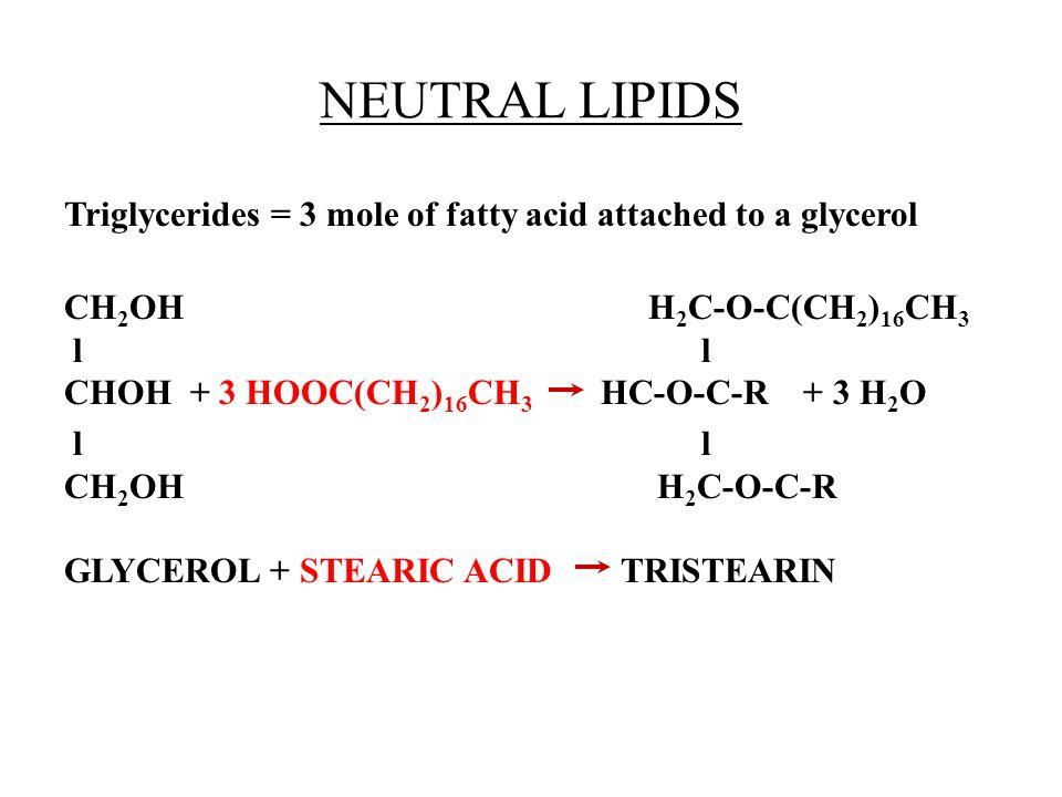 NEUTRAL LIPIDS Triglycerides = 3 mole of fatty acid attached to a glycerol CH 2 OH H 2 C-O-C(CH 2 ) 16 CH 3 l l CHOH + 3 HOOC(CH 2 ) 16 CH 3 HC-O-C-R + 3 H 2 O l l CH 2 OH H 2 C-O-C-R GLYCEROL + STEARIC ACID TRISTEARIN