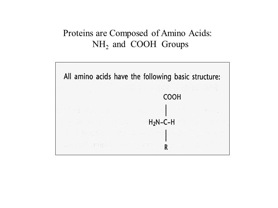 Proteins are Composed of Amino Acids: NH 2 and COOH Groups