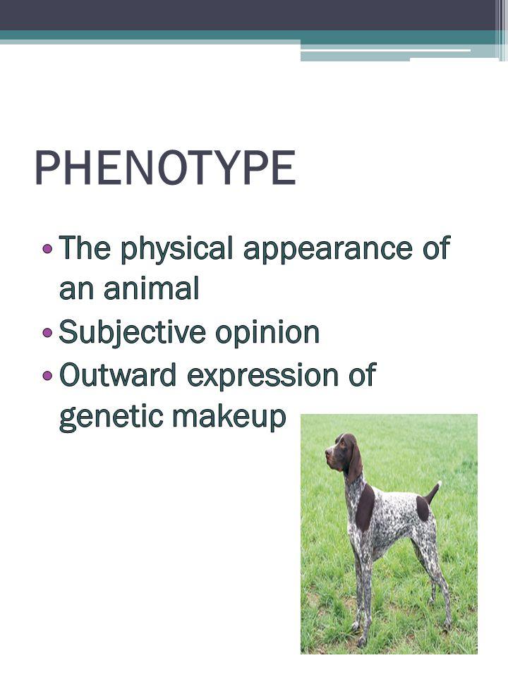 Phenotypic Testing Conformation Shows/Testing ▫ Meet Breed Standard Screening Organizations ▫ OFA ▫ PennHip ▫ CERF