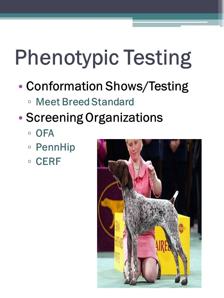 Phenotypic Testing Conformation Shows/Testing ▫ Meet Breed Standard Screening Organizations ▫ OFA ▫ PennHip ▫ CERF