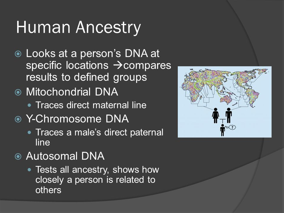 Human Ancestry  Looks at a person's DNA at specific locations  compares results to defined groups  Mitochondrial DNA Traces direct maternal line  Y-Chromosome DNA Traces a male's direct paternal line  Autosomal DNA Tests all ancestry, shows how closely a person is related to others