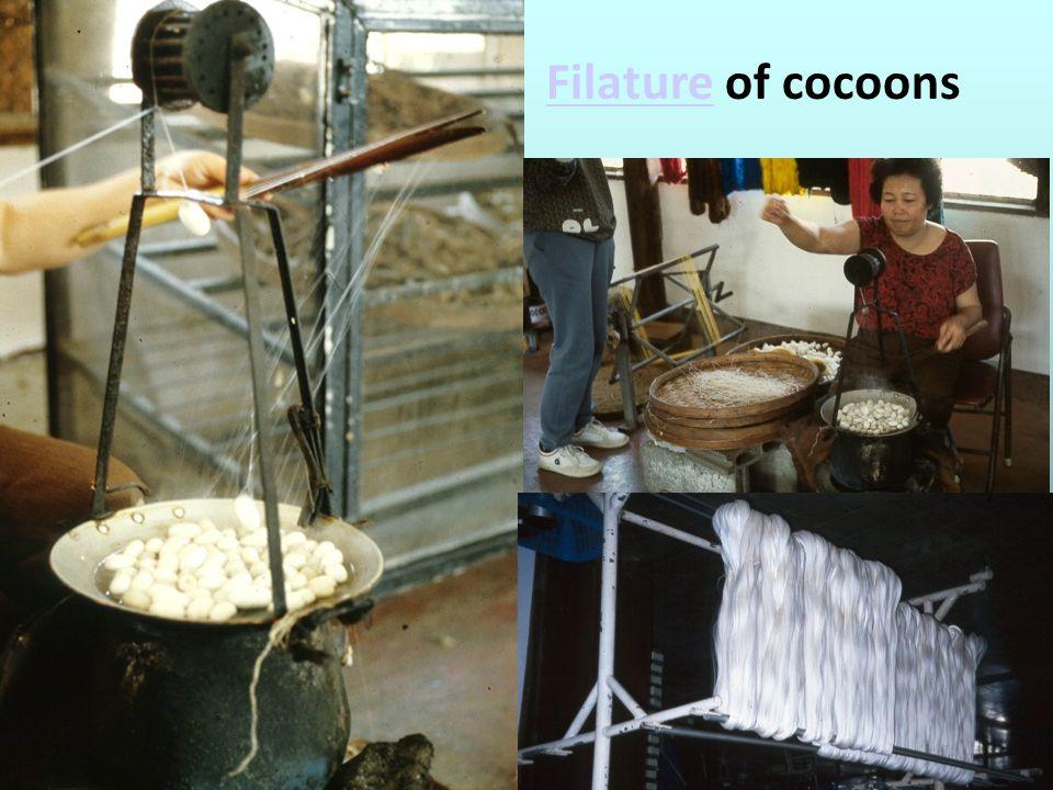 FilatureFilature of cocoons