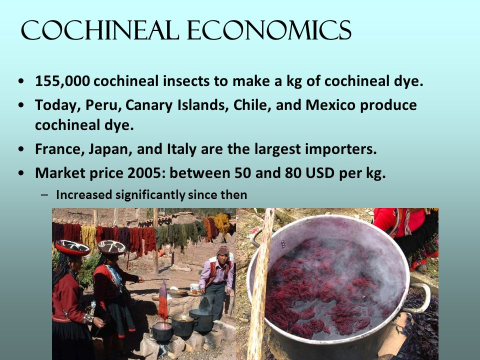 Cochineal Economics 155,000 cochineal insects to make a kg of cochineal dye. Today, Peru, Canary Islands, Chile, and Mexico produce cochineal dye. Fra