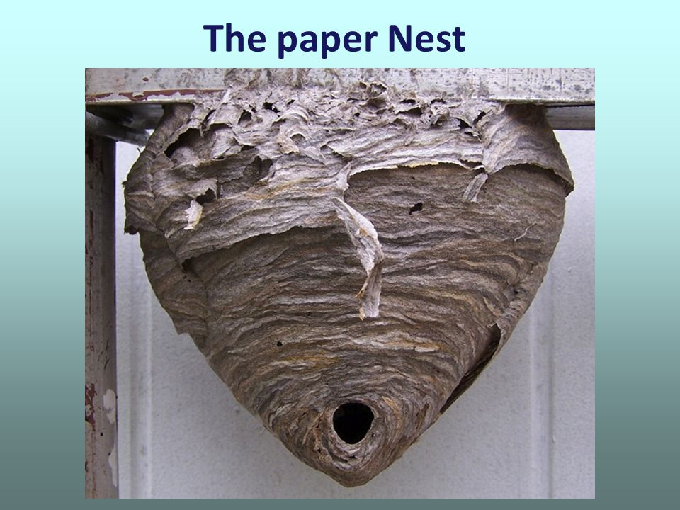 The paper Nest