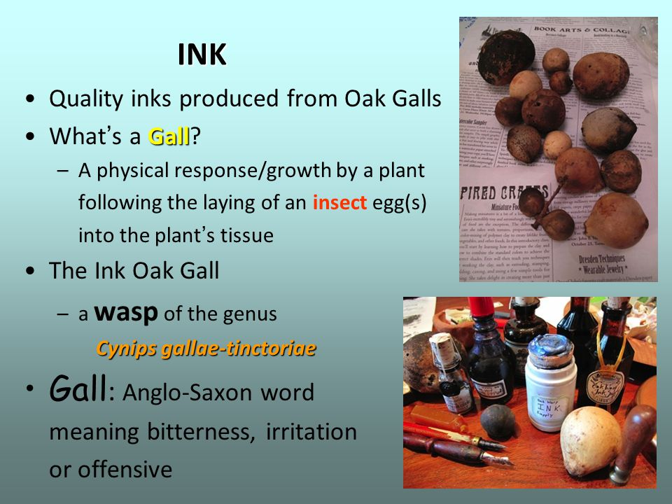 INK Quality inks produced from Oak Galls GallWhat ' s a Gall? –A physical response/growth by a plant following the laying of an insect egg(s) into the