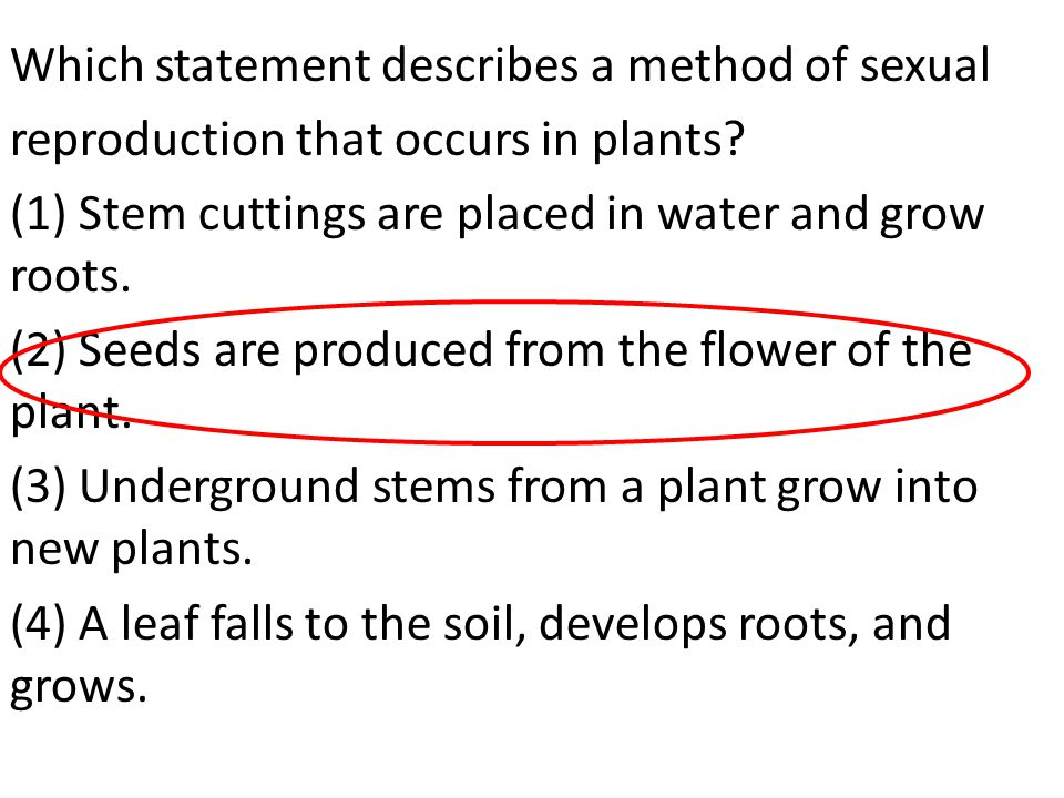 Which statement describes a method of sexual reproduction that occurs in plants? (1) Stem cuttings are placed in water and grow roots. (2) Seeds are p