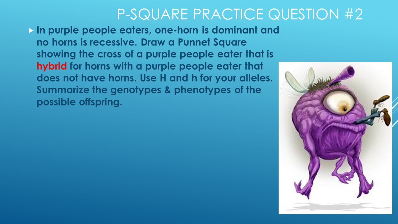 P-SQUARE PRACTICE QUESTION #2  In purple people eaters, one-horn is dominant and no horns is recessive.