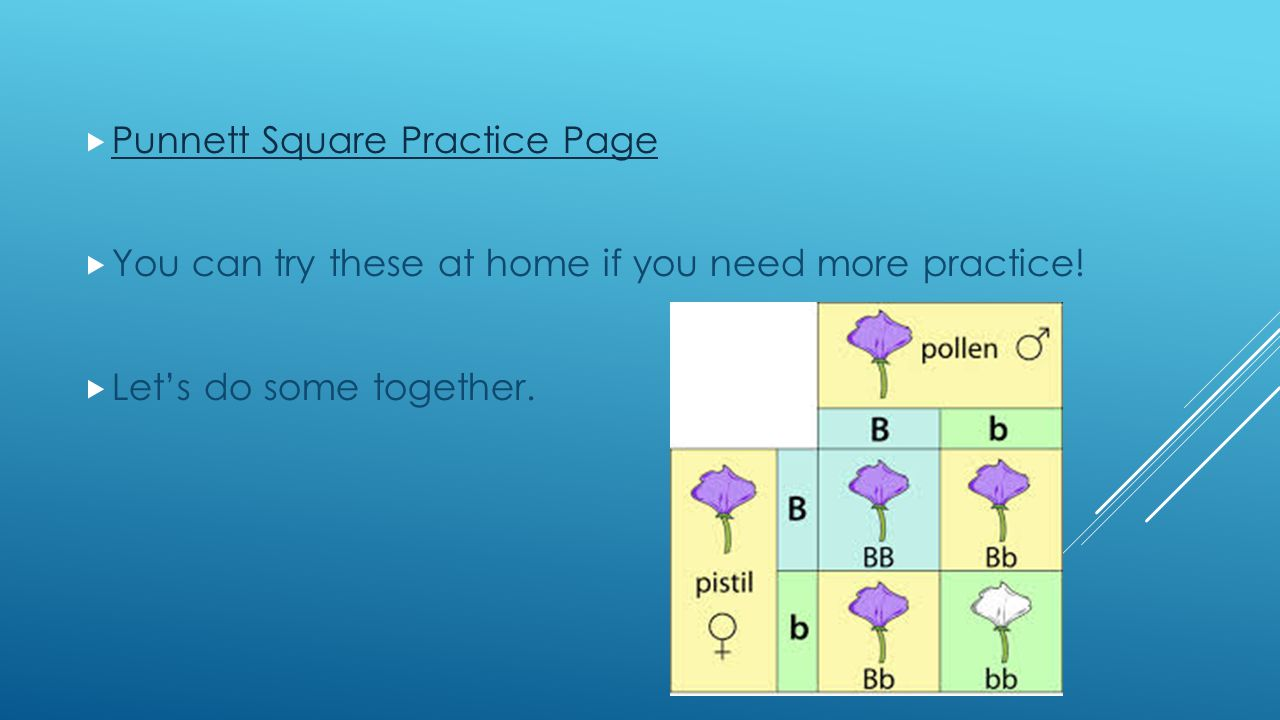  Punnett Square Practice Page Punnett Square Practice Page  You can try these at home if you need more practice.
