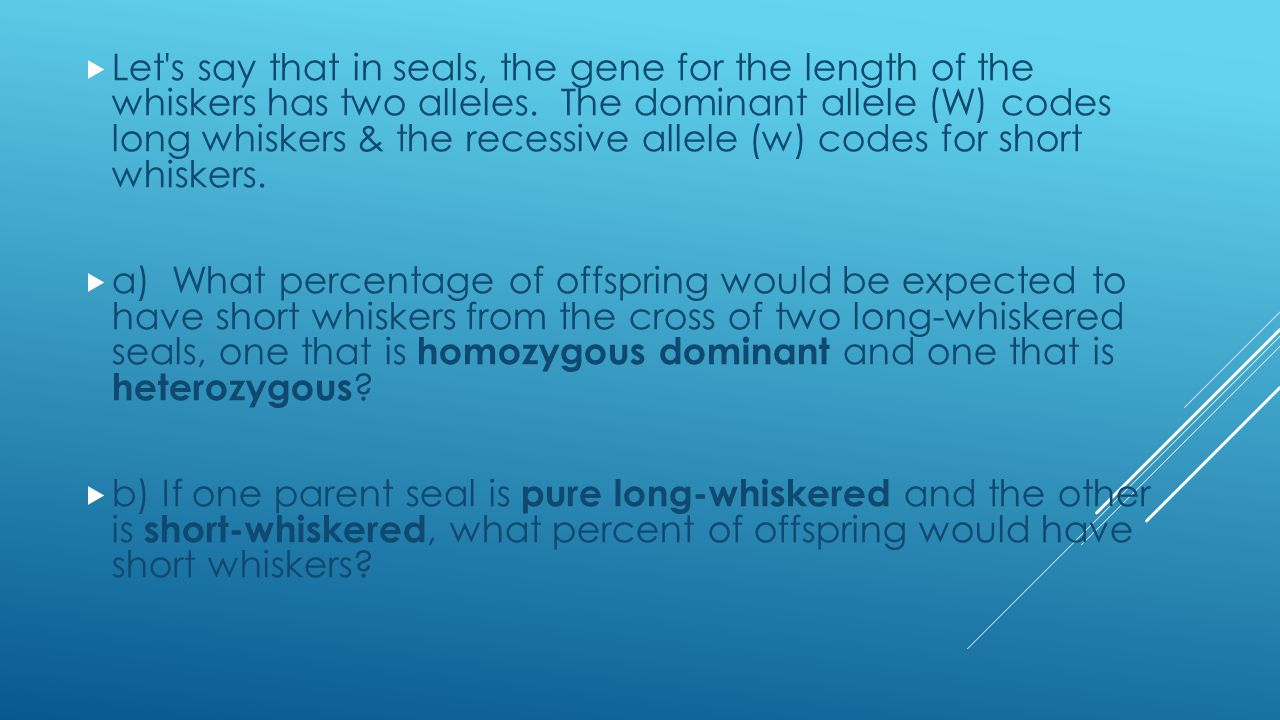  Let s say that in seals, the gene for the length of the whiskers has two alleles.