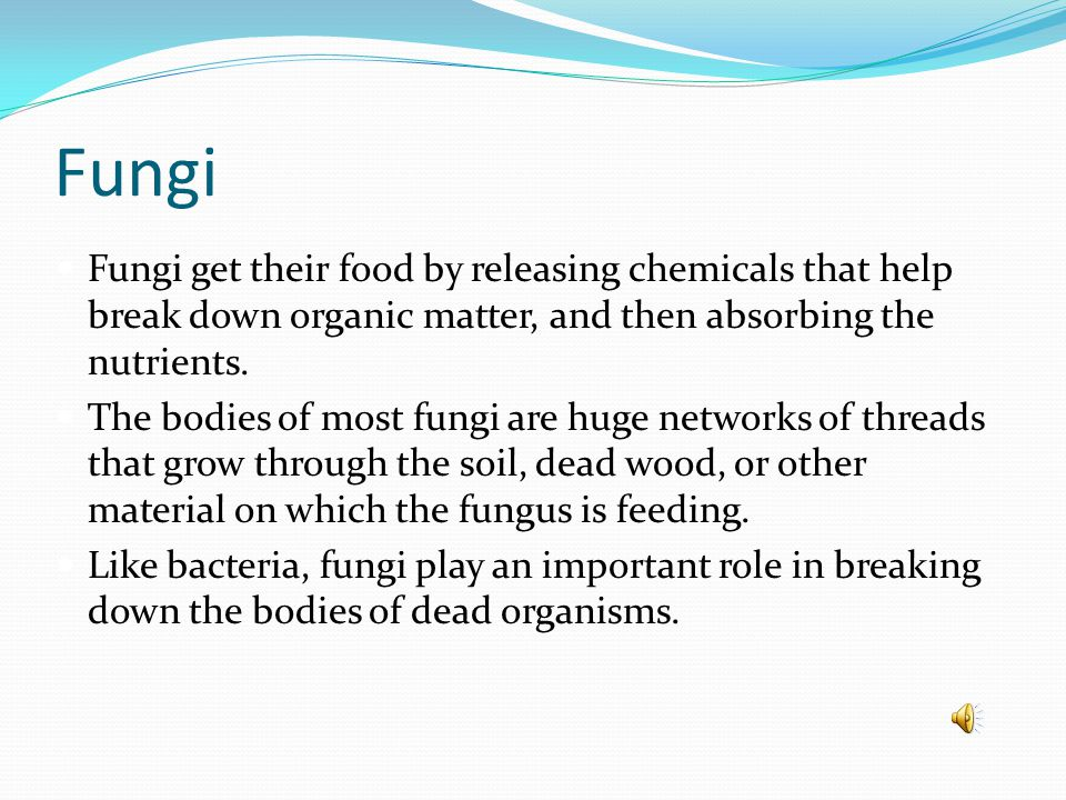 Fungi A fungus is an organism whose cells have nuclei, rigid cell walls, and no chlorophyll and that belongs to the kingdom Fungi. Cell walls act like
