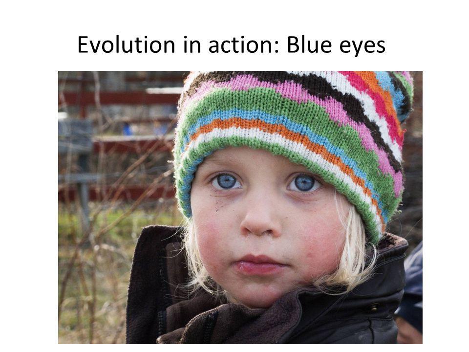 Evolution in action: Blue eyes