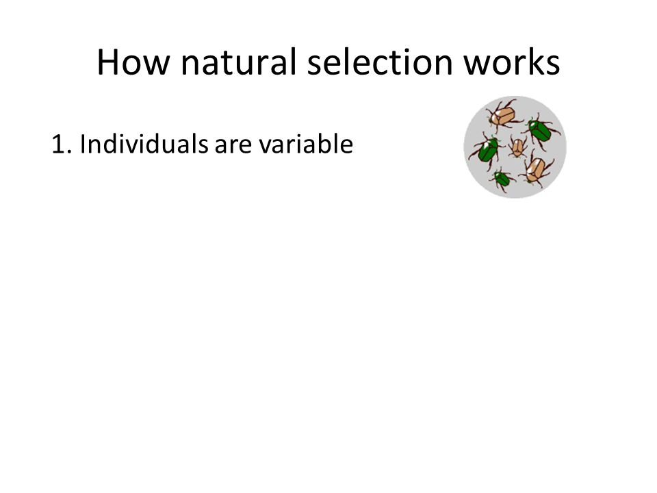 How natural selection works 1. Individuals are variable