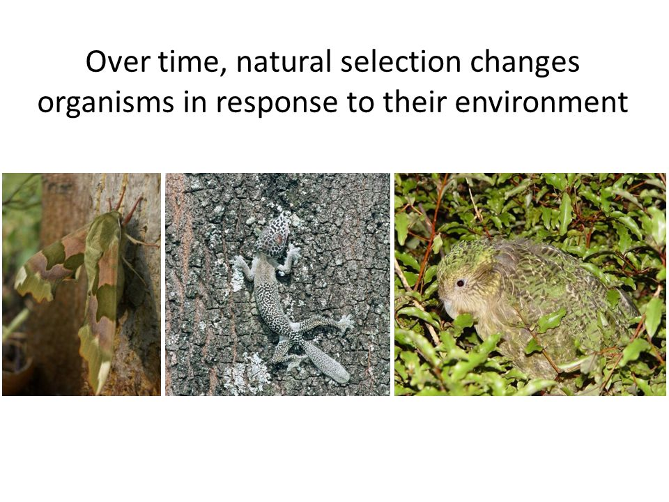 Over time, natural selection changes organisms in response to their environment