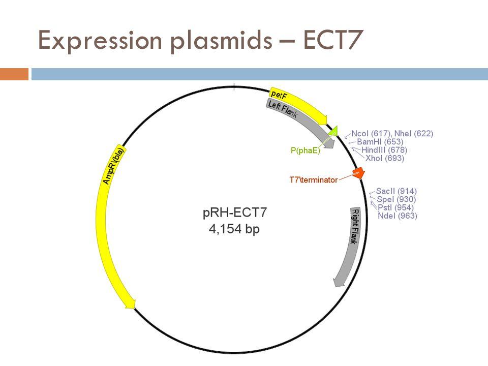 Expression plasmids – ECT7